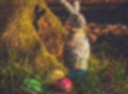 easter-bunny-and-eggs-on-grass-field-209