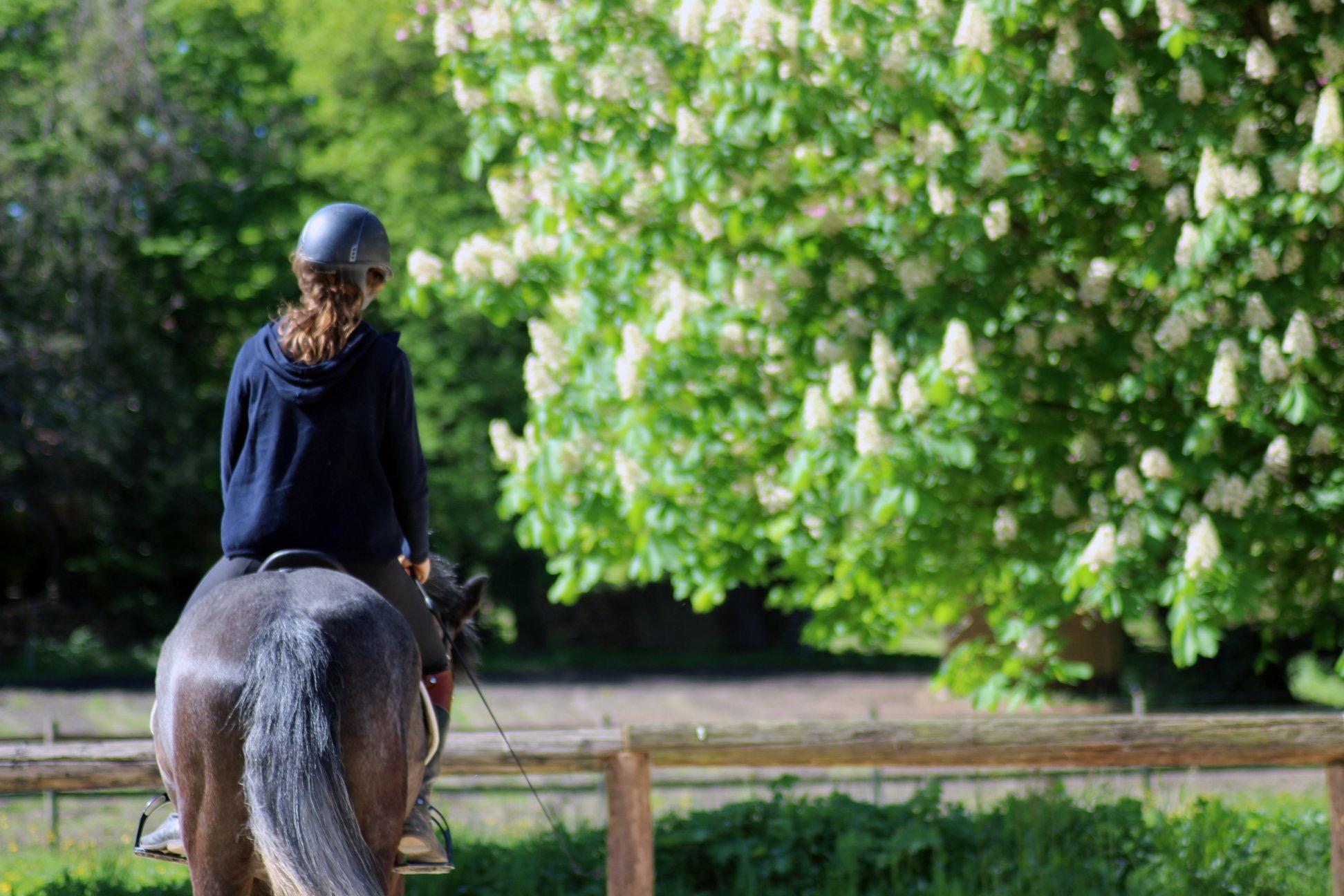 Balade a cheval en foret de rambouillet galluis 78 equitation we 2