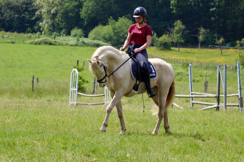 Les_Petites_Écuries_actualité_concours_poney_équitation_galluis_78_6