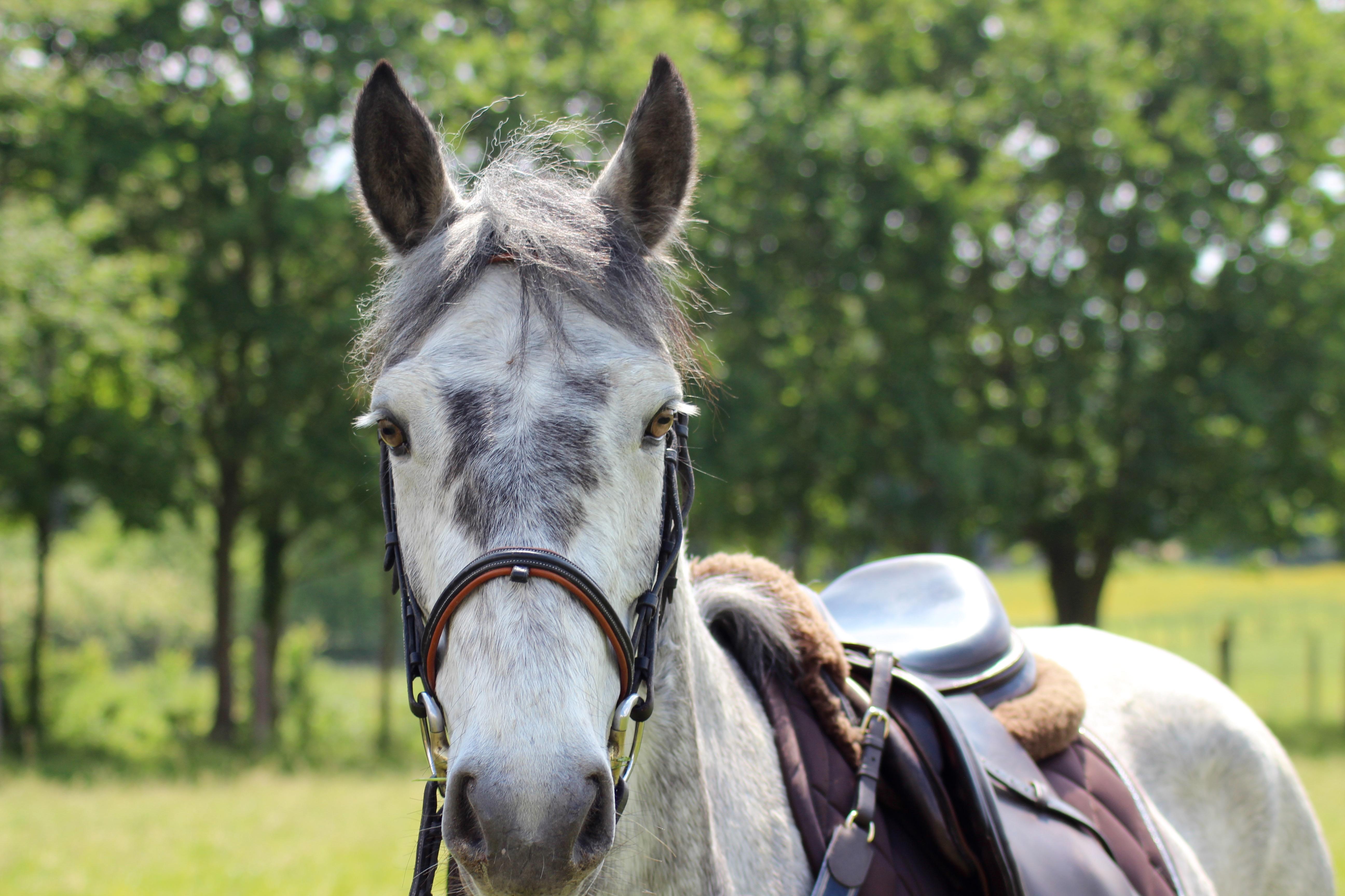 Les_Petites_Écuries_actualité_concours_poney_équitation_galluis_78_12