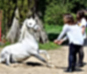 Les Petites Écuries 78 chevaux et poney enseignement pension balade stage equitation loisir competition vente