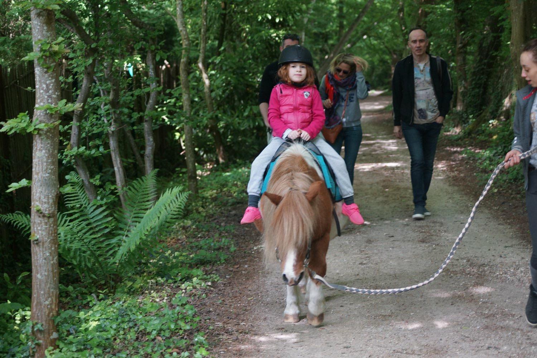 Balade a cheval en foret de rambouillet galluis 78 equitation we 4