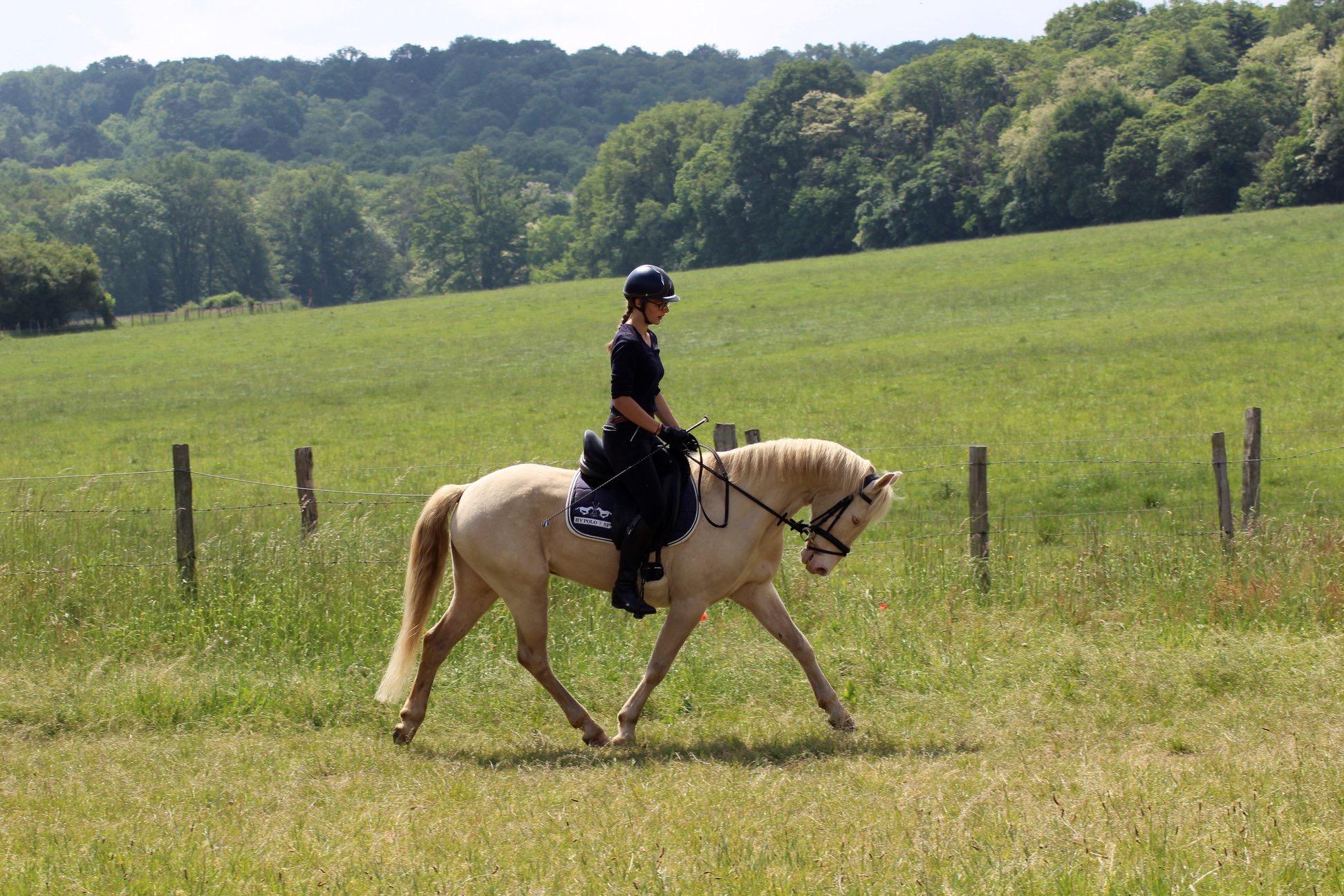 Les_Petites_Écuries_actualité_concours_poney_équitation_galluis_78_16