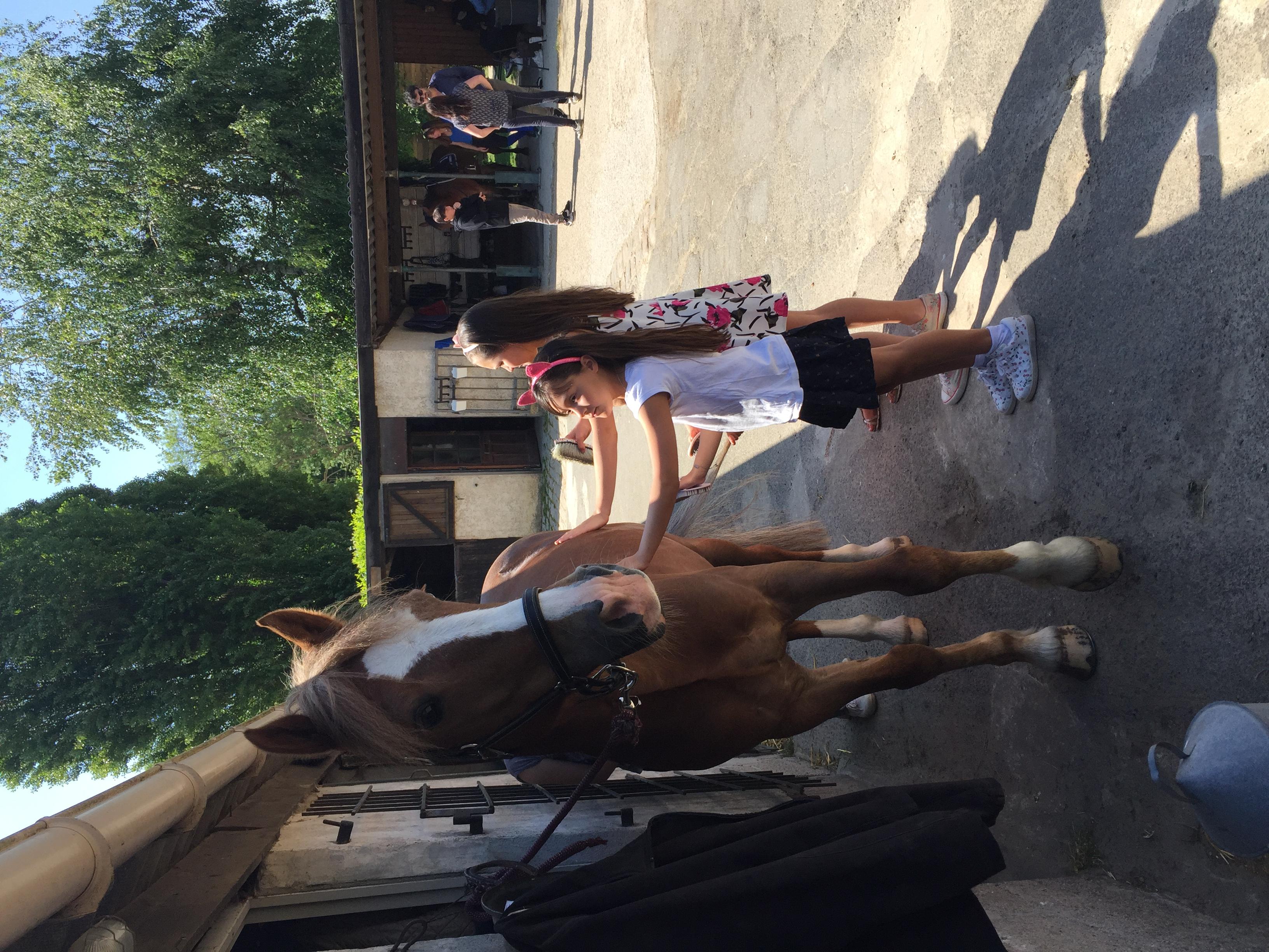Les_Petites_Écuries_actualité_concours_poney_équitation_galluis_78_13
