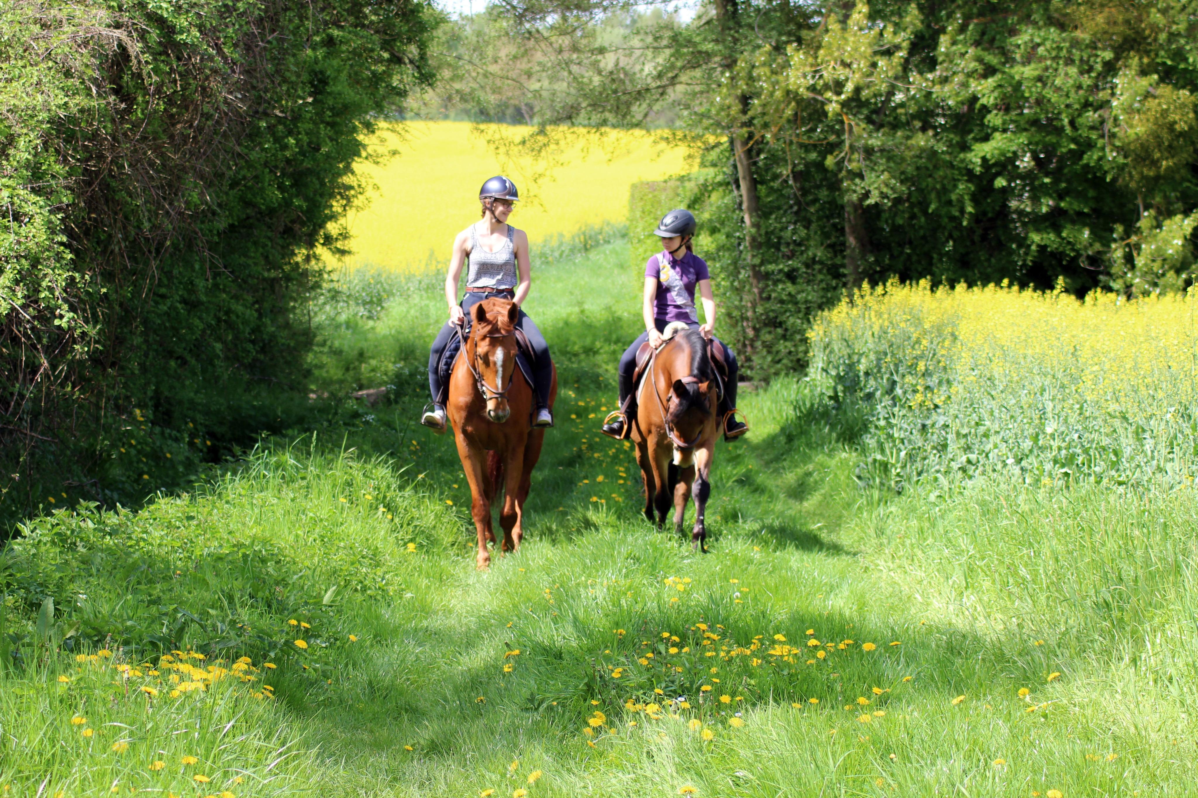 les petites ecuries loisir balade en foret equitation