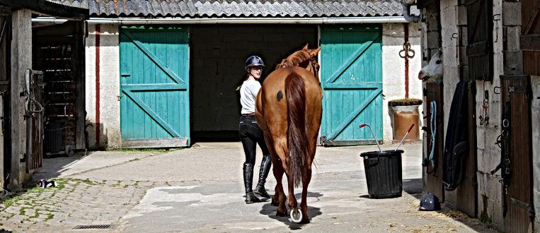 les petites ecuries 78 école d'equitation pension competition balades ...