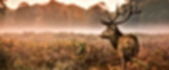 promenade àcheval en foret de rambouillet galluis yvelines lespetitesecuries poney cheval