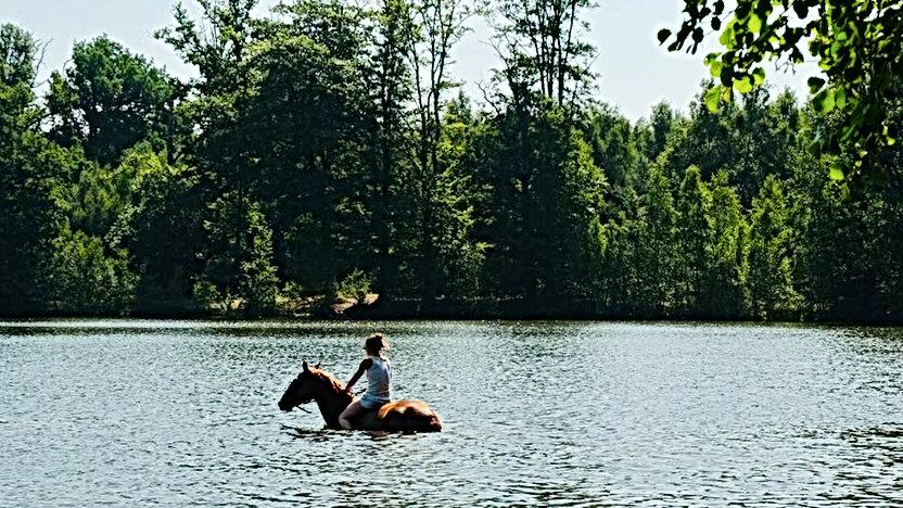 equitation galluis 78 baignade a cheval.