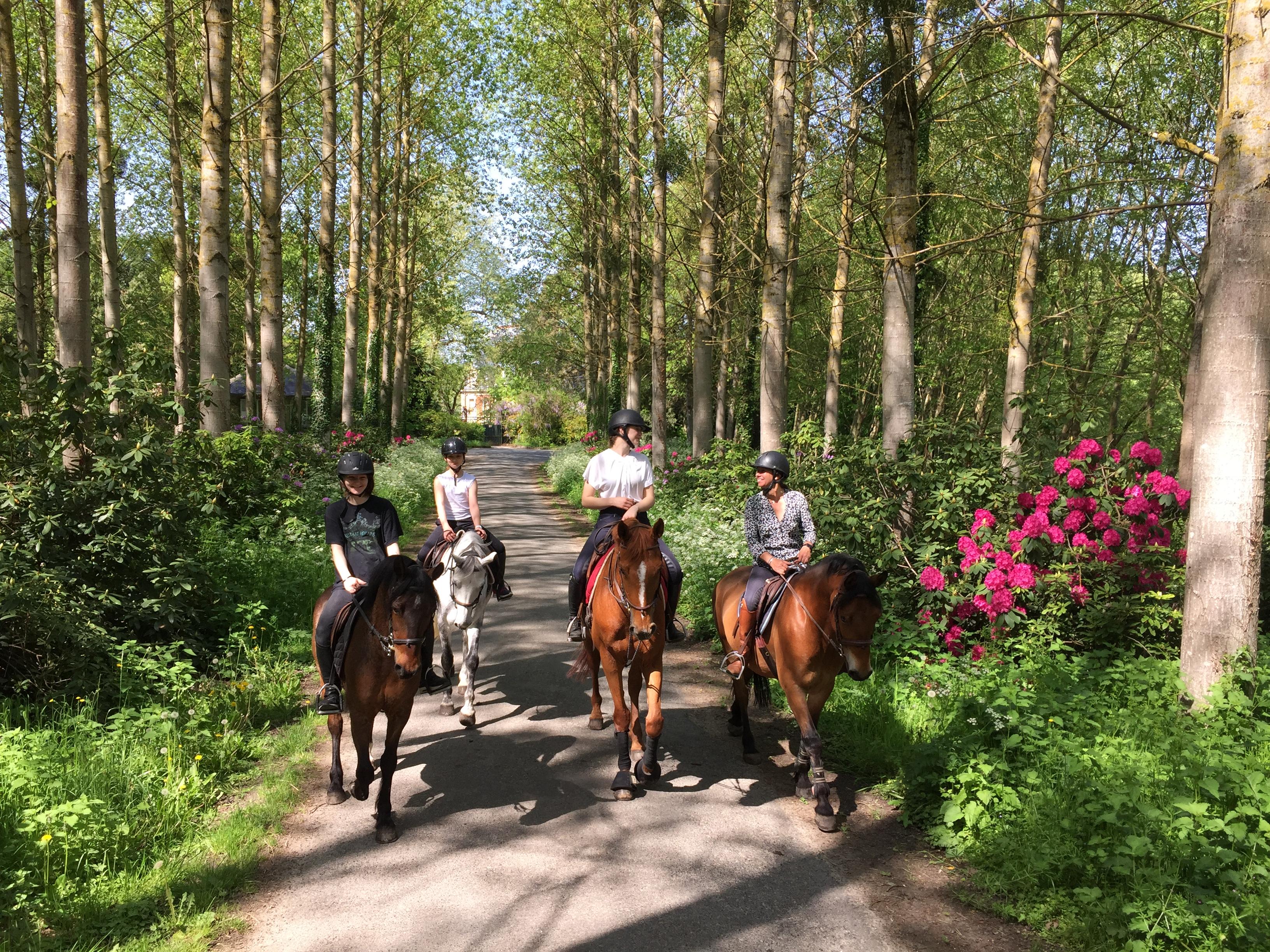 Balade a cheval en foret de rambouillet galluis 78 equitation we