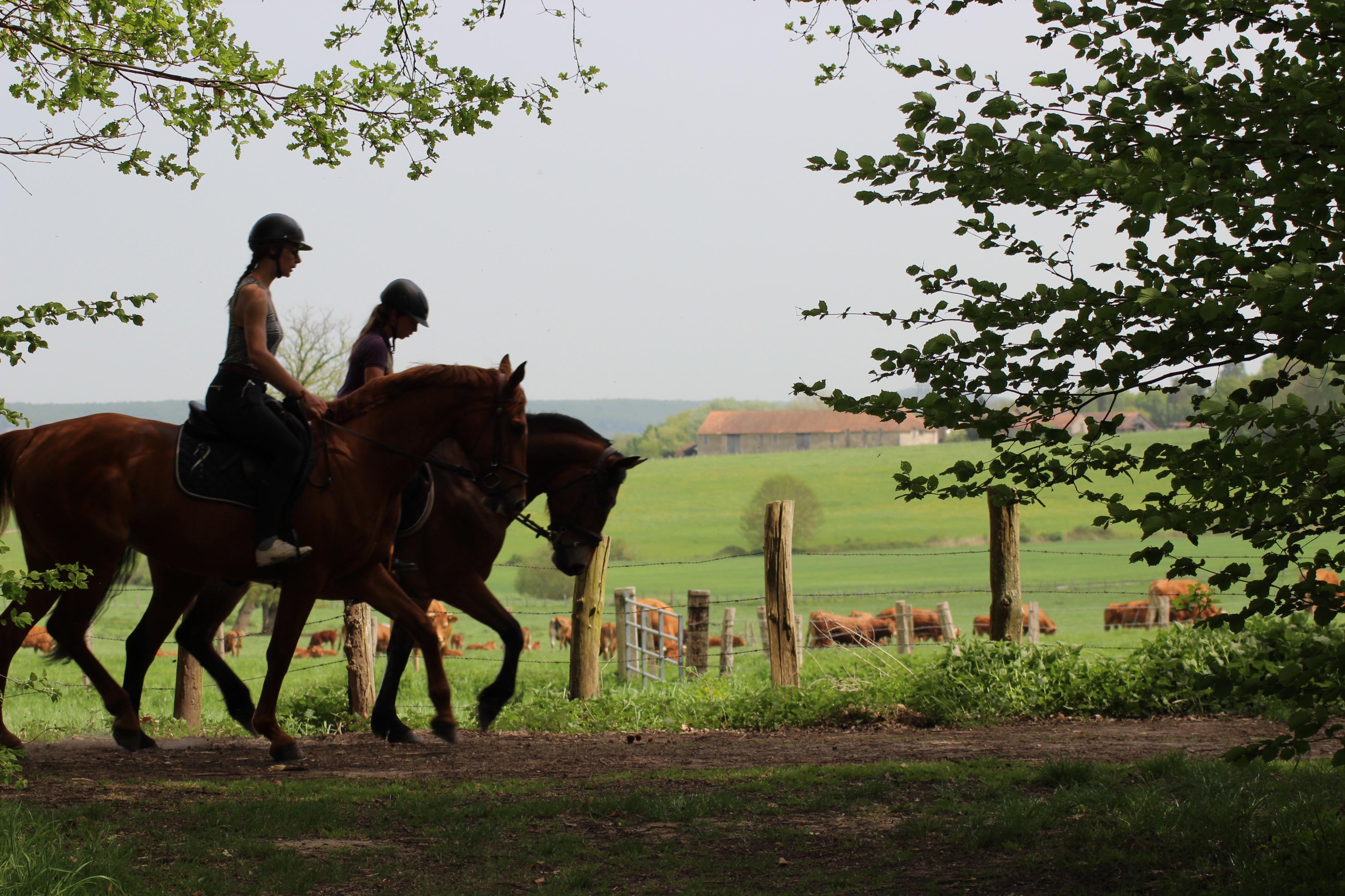promenade a cheval en foret de rambouillet les petites ecuries