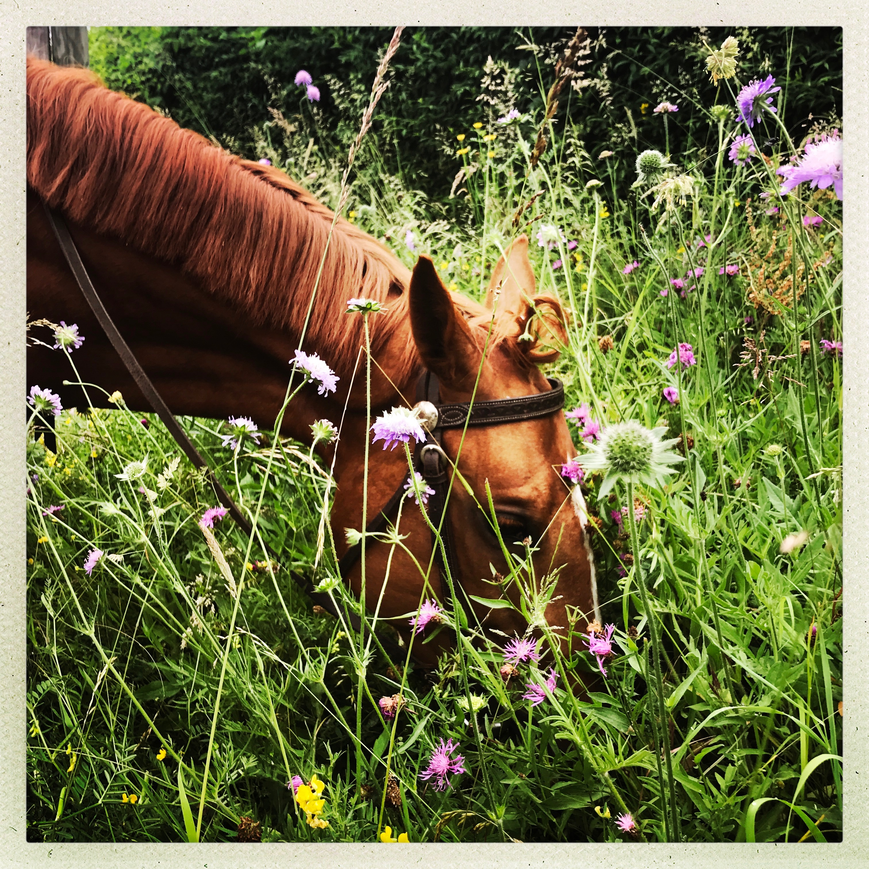 Les_Petites_Écuries_actualité_concours_poney_équitation_galluis_78_24