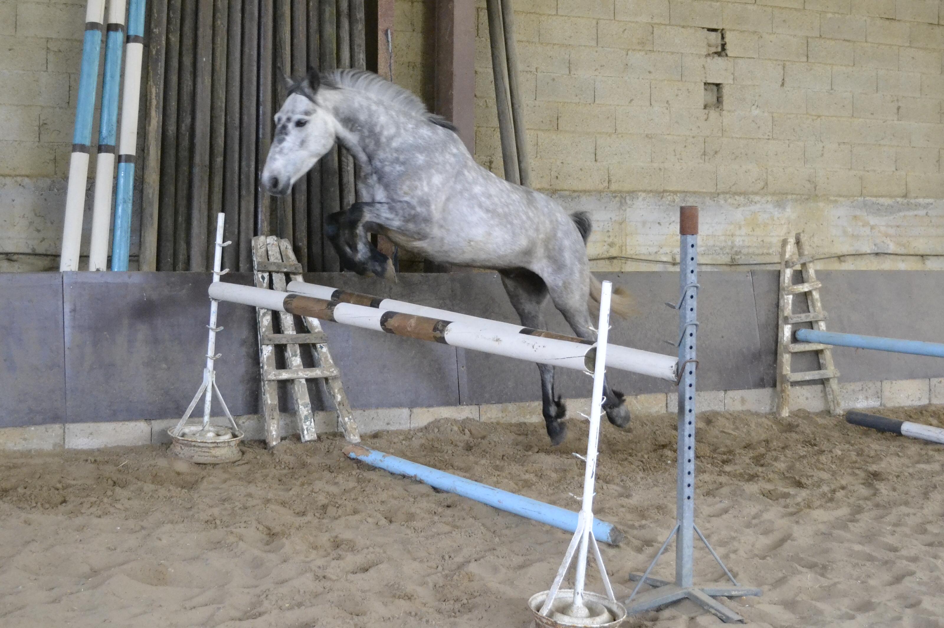 Les_Petites_Écuries_actualité_concours_poney_équitation_galluis_78_11