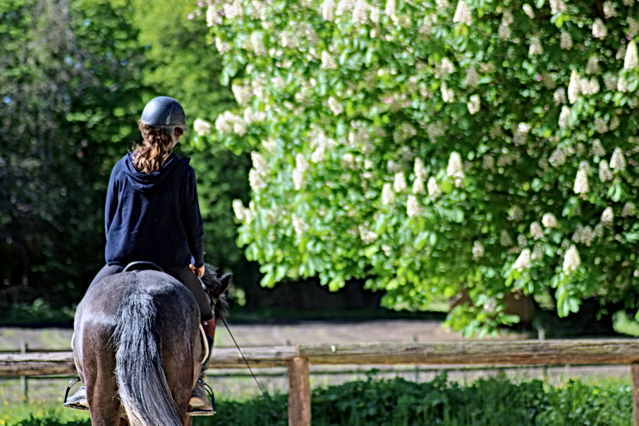 Balade a cheval en foret de rambouillet