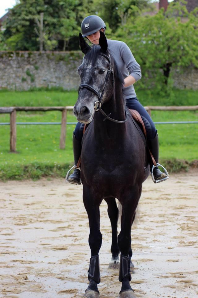 Balade a cheval en foret de rambouillet galluis 78 equitation we 1