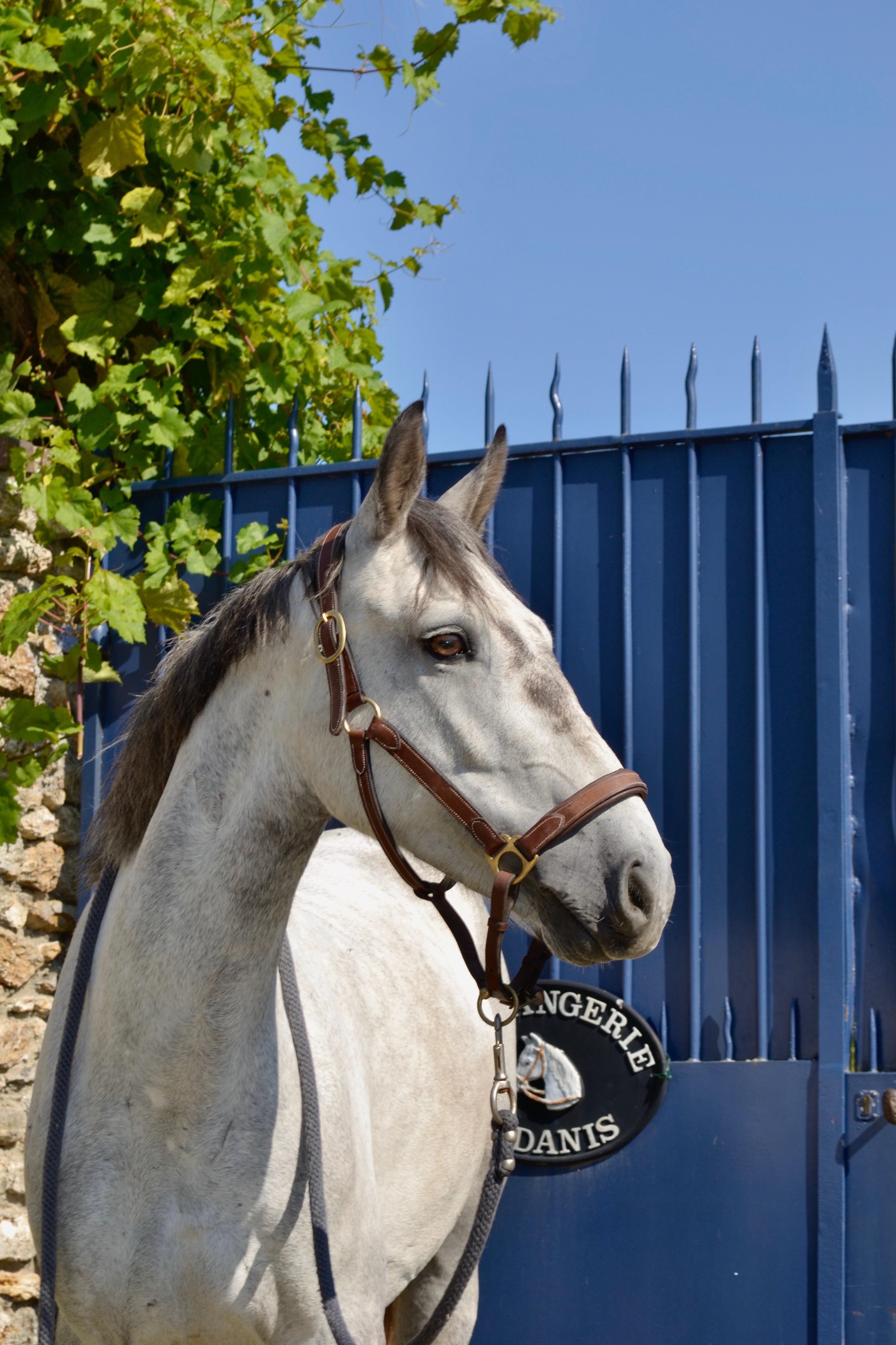 Poney_club_galluis_cours_d'equitation_78