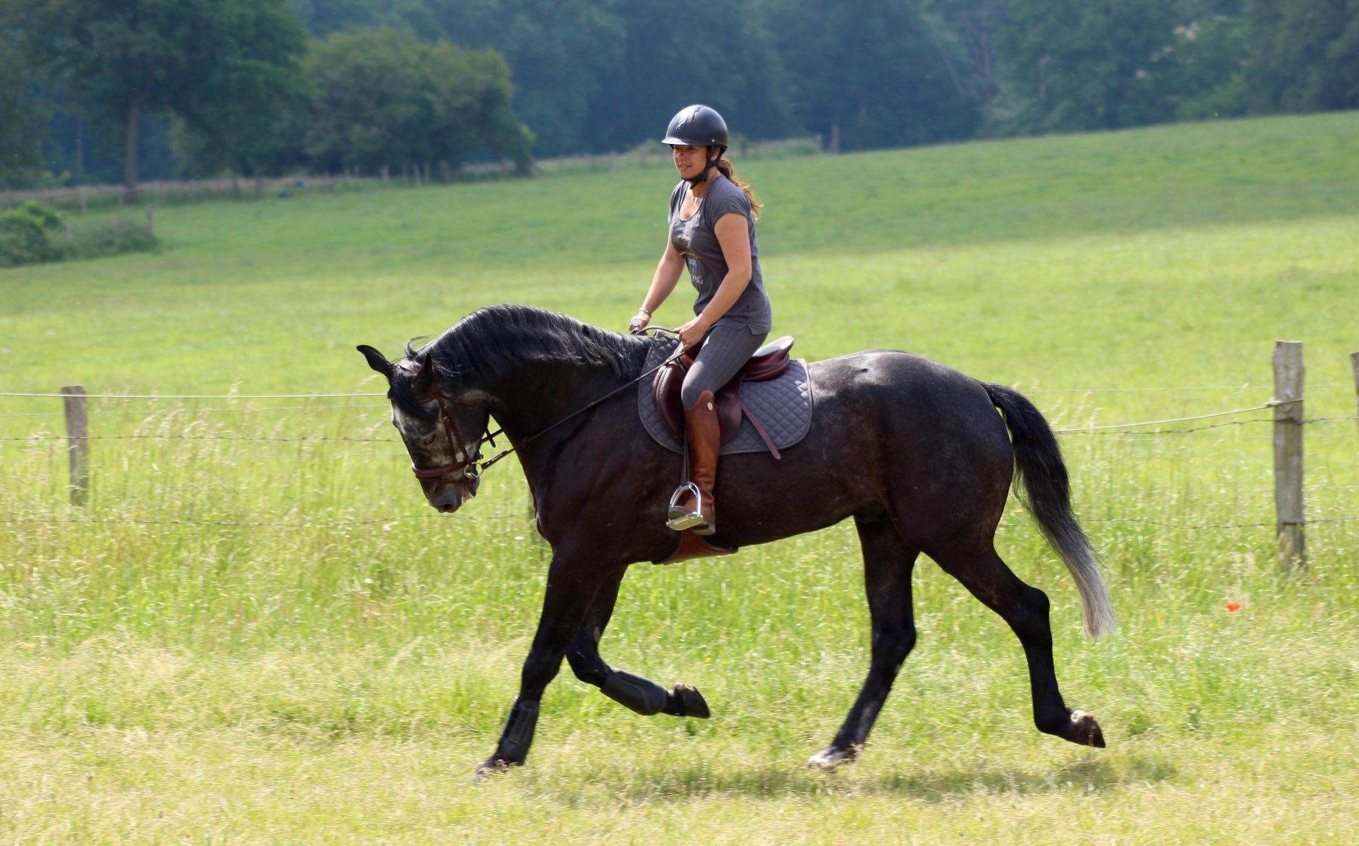 Les_Petites_Écuries_actualité_concours_poney_équitation_galluis_78_8