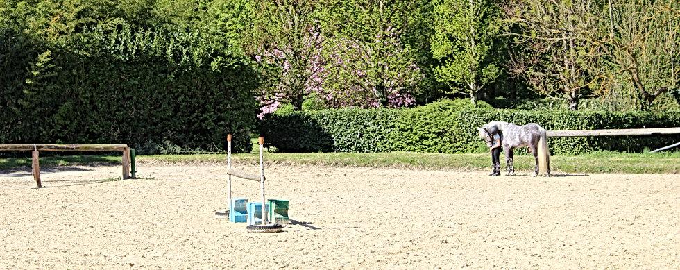 Les Petites Écuries 78 Galluis chevaux et poney enseignement demi pension balade stage equitation loisir competition vente