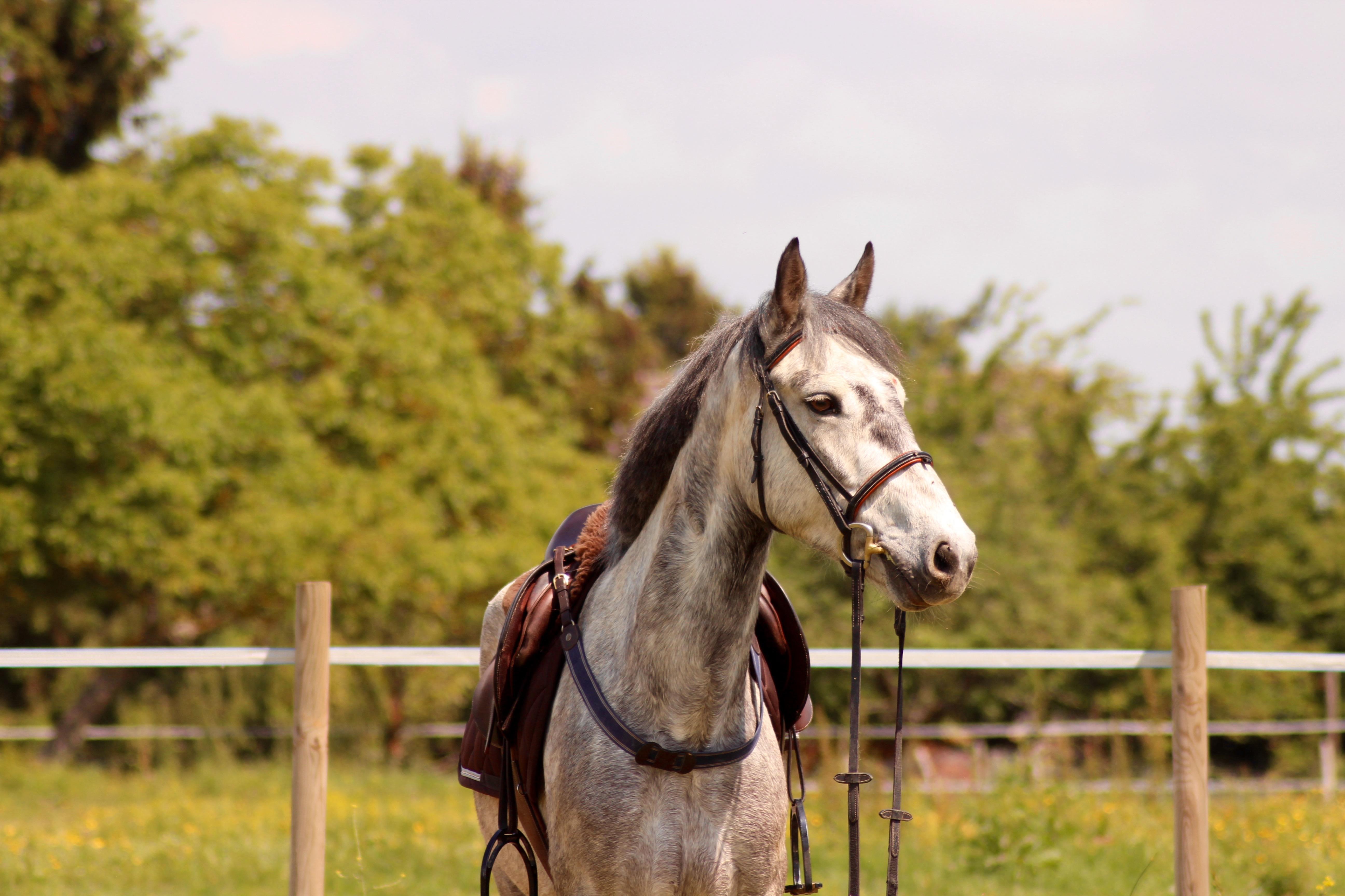 Les_Petites_Écuries_actualité_concours_poney_équitation_galluis_78_1