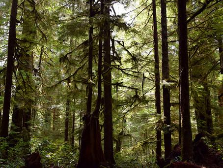 The Sanctity of Avatar Grove