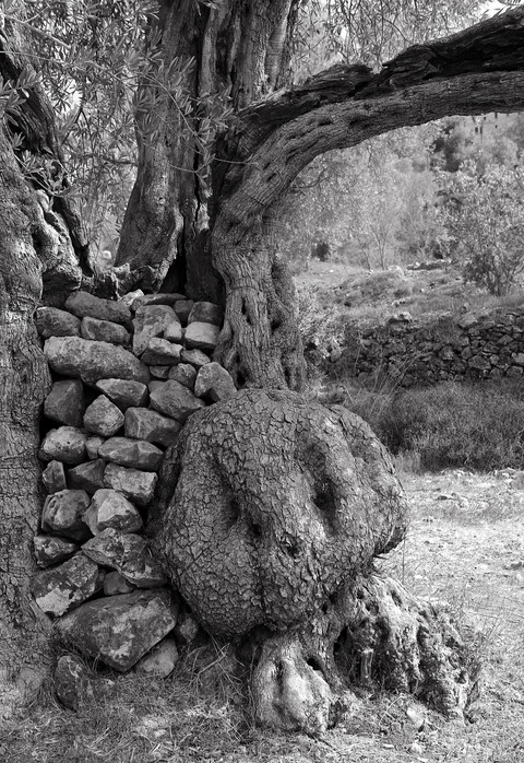 A Trunk of Stones