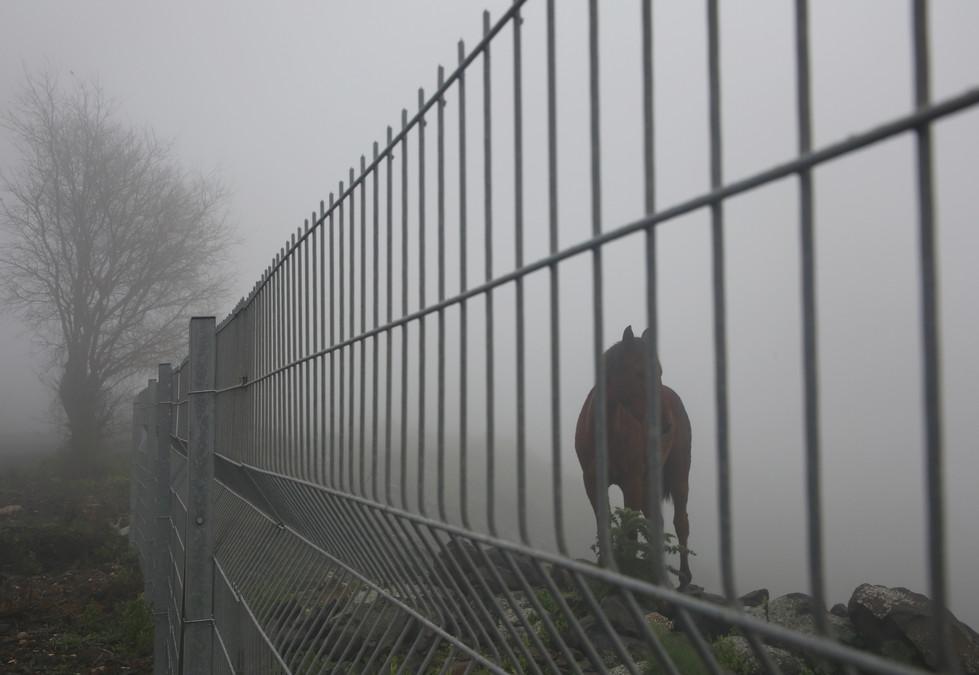 A Horse on the Fog