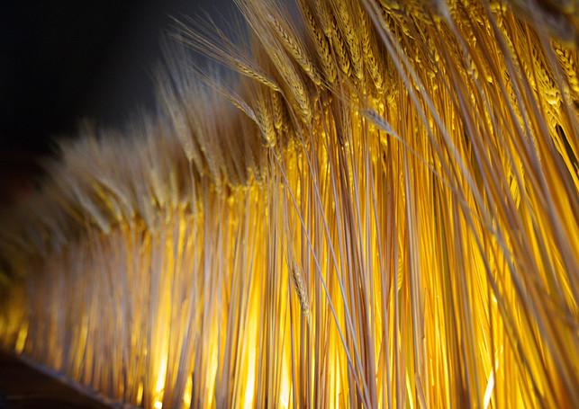 milagro_wheat_wall.jpg