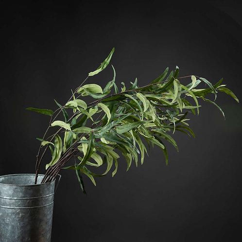 Eucalyptus Nicholii Spray