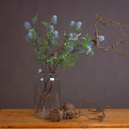 Eryngium Blue Thistle