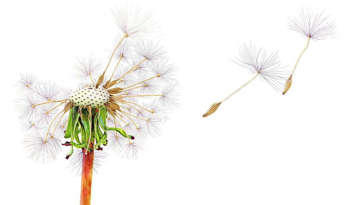 Dandelion-Business-Card.jpg