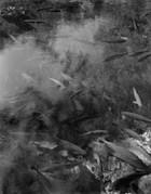 Nascente do Rio Baia Bonita – IV, 2002