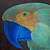 Papagaio, 1980