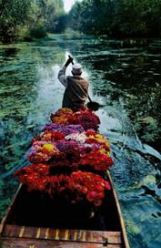Kashmir Flower Seller, 2016
