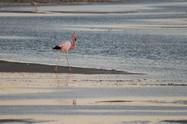 Flamingo Parade I, 2008