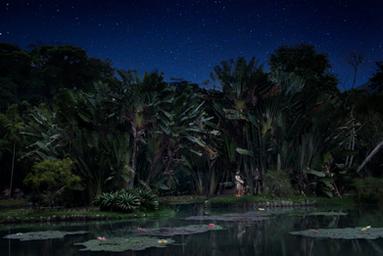 Jardim Botânico (Lago) 2016