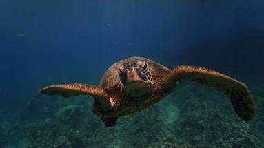 Turtle, 2018
