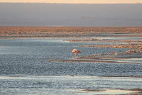 Flamingo Parade II, 2008