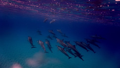 Swimming with the Dolphins 2, 2017