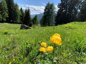 Madonna di Campiglio circondata dalle Dolomiti di Brenta