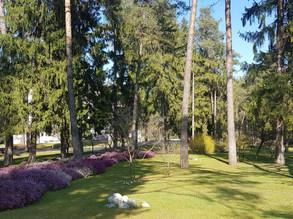 """""""Forest Bathing"""" un bagno di natura alle Terme di Comano"""