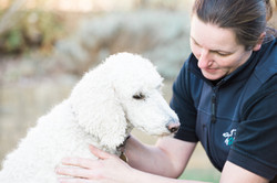 Animate canine physiotherapy