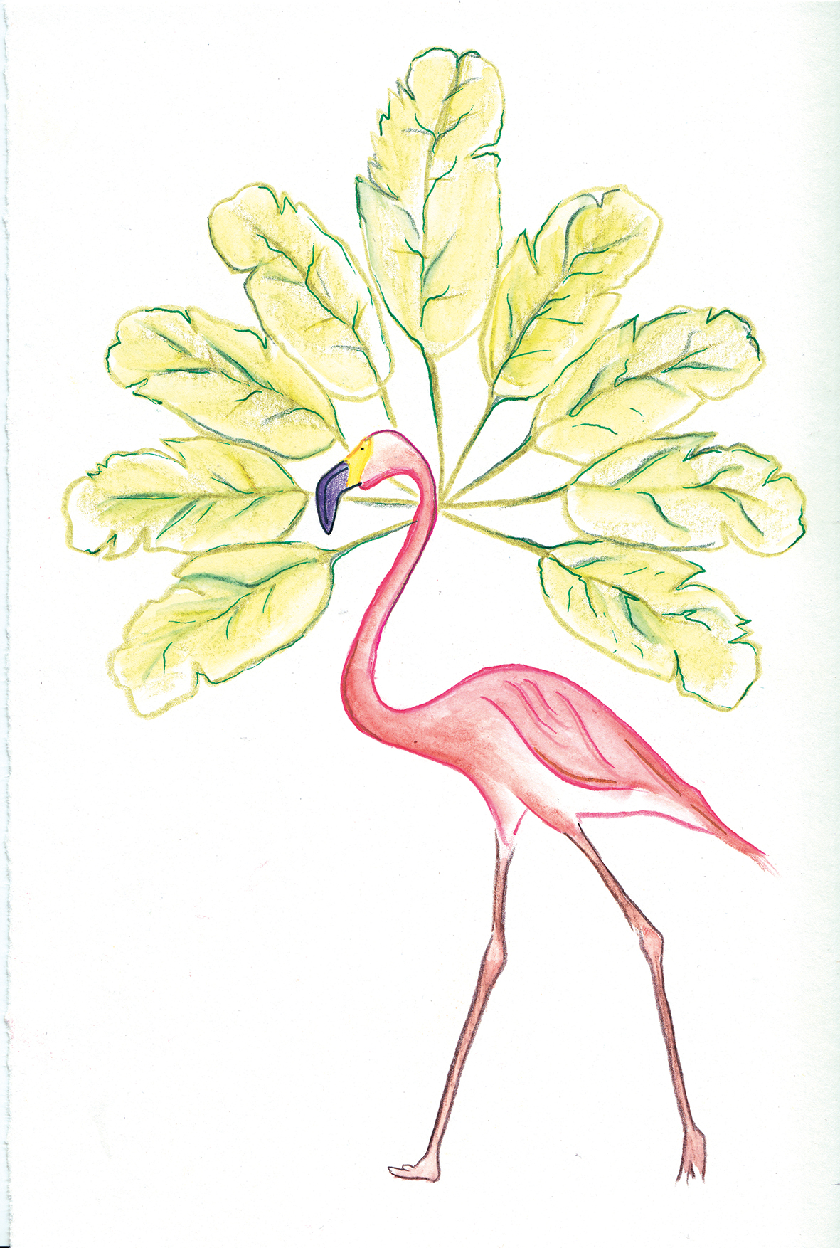 """Flamingo and Banana Tree"""