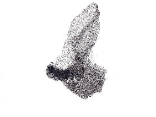 BlankTVsnow/BirdCloud