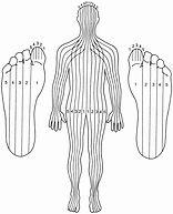 Les zones de reflexologie du docteur fitzgerald
