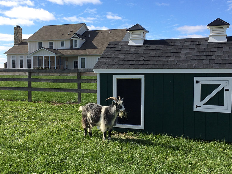 goat house and goat