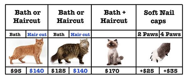 cat salon price 2022.jpg