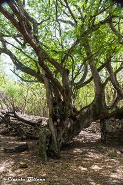 Martinique_0497.jpg