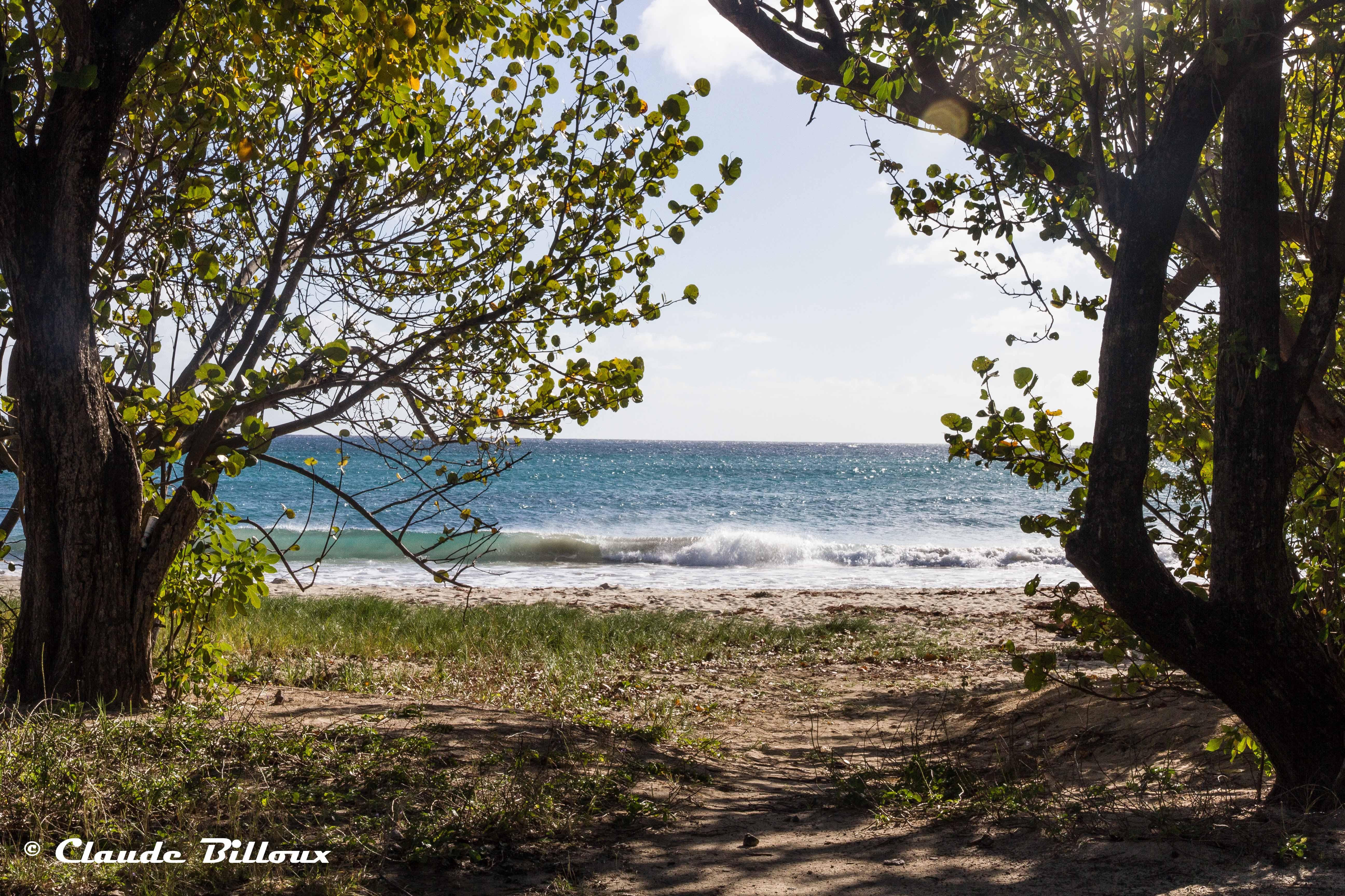 Martinique_0201.jpg