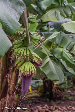 Martinique_0536.jpg