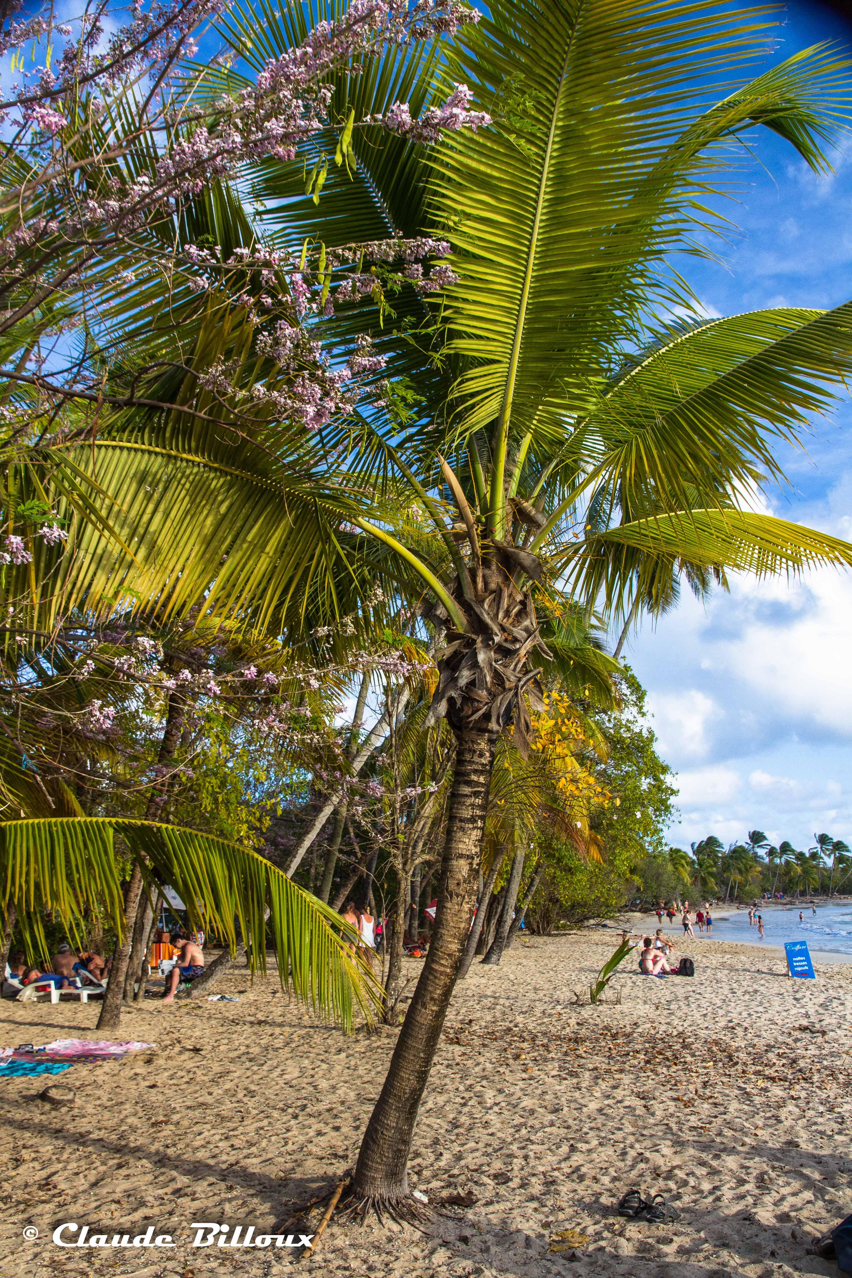 Martinique_0239.jpg