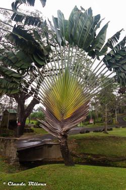 Martinique_0437.jpg